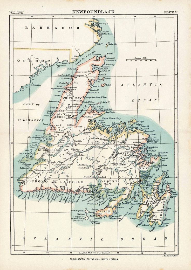 Antique Map of Newfoundland - 1884 Vintage Map - Home Decor - Gift for Her - Gift for Him by bananastrudel on Etsy