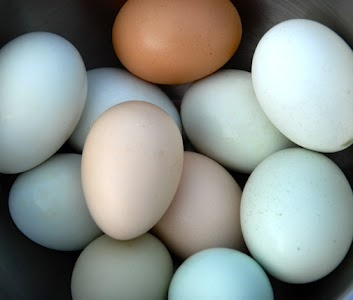 Eggs from our heritage chickens.