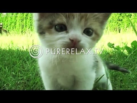 ▶ Relaxation For Children - Music for Learning, Quiet, Positive, Harmony - PURE RELAX - YouTube