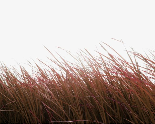 Brown Simple Grass Decoration Pattern Png And Clipart Blur Photo Background Photo Background Images Blue Background Images