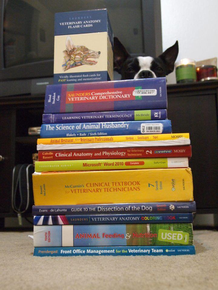 17 Best images about Vet Tech on Pinterest | Veterinary technician ...