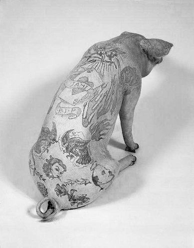Wim Delvoye, Tattooed pig, not really sure how i feel about this business...