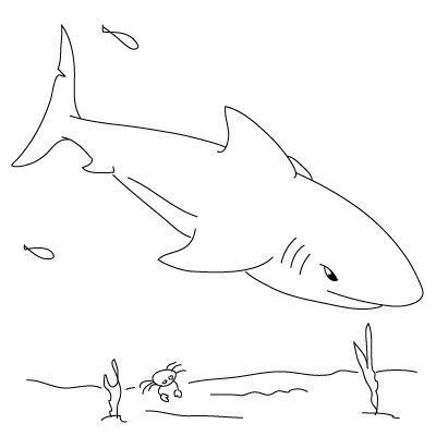 step by step for how to draw a shark