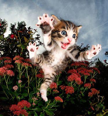Γατάκια στον... αέρα!