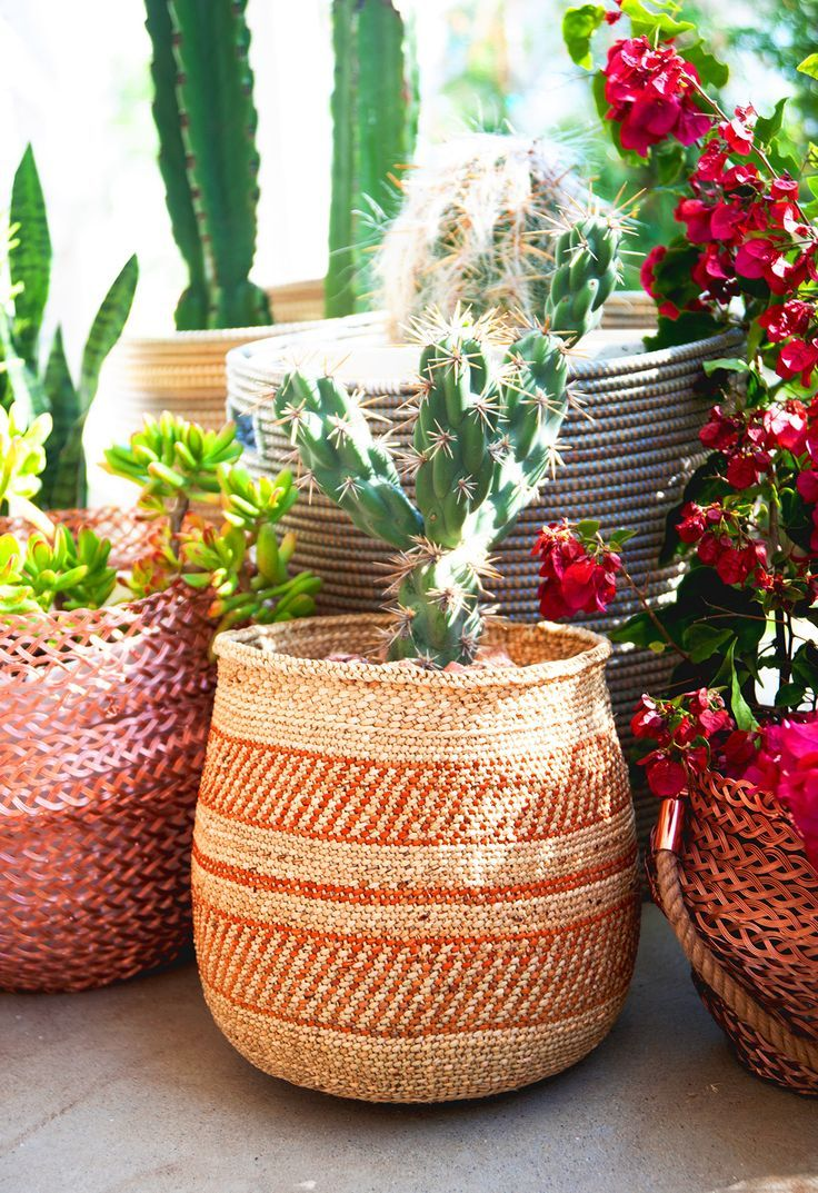 Succulents in woven baskets