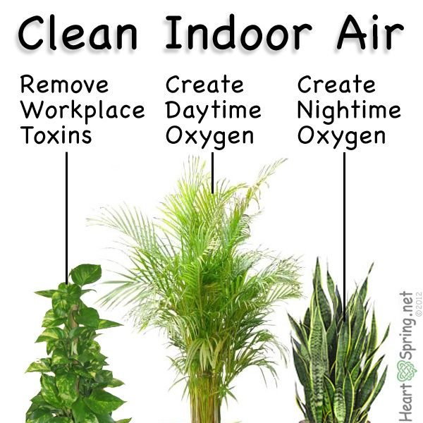 Plants Are Used To Clean Indoor Air Pollution Create