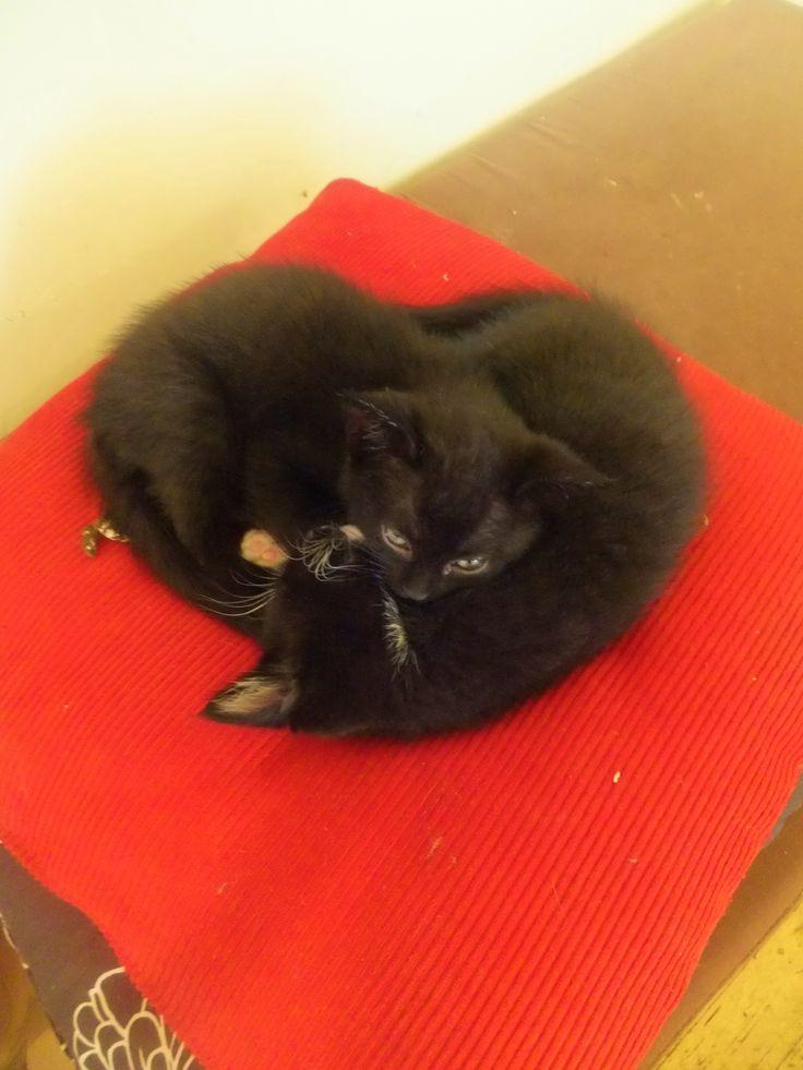 love kittens (by Pingwynne)