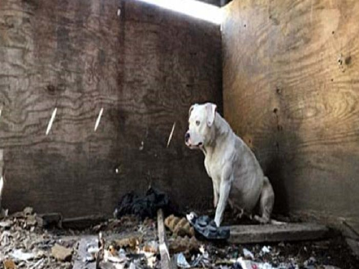 Netizen tersentuh Anjing yang dirantai terpaksa mamah kaki sendiri demi teruskan hidup   KEAZAMAN seekor anjing jalanan untuk meneruskan hidup hingga melakukan perkara di luar batasan sememangnya menyentuh hati ramai netizen.  Treya yang merupakan anjing ditinggalkan di sebuah rumah sewa di Missouri Amerika Syarikat memamah kaki sendiri untuk melepaskan diri daripada dirantai selepas pemiliknya dipercayai mati dibunuh lima tahun lalu.  Menurut Daily Mail Treya yang dirantai selama lima tahun…
