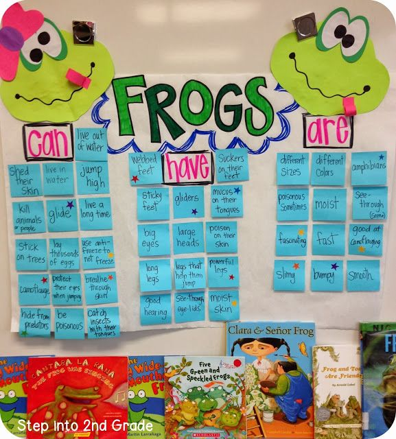 AMPHIBIANS Frog and Toad Comparison - Step into 2nd Grade with Mrs. Lemons