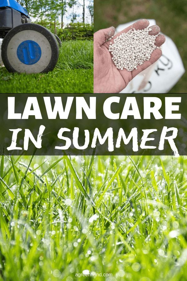 How To Care Your Lawn In The Summer Lawn Care Lawn Lawn Fertilizer
