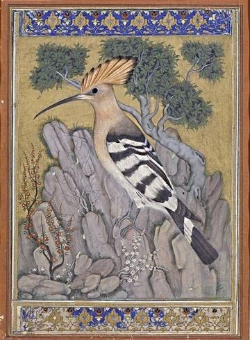 Hoopoe bird - Mughal 17th century miniature