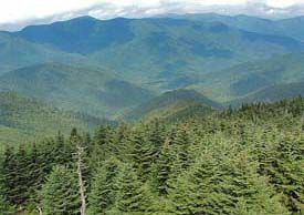 Mt. Mitchell State Park, at an elevation of 6,684 feet, is the highest point east of the Mississippi
