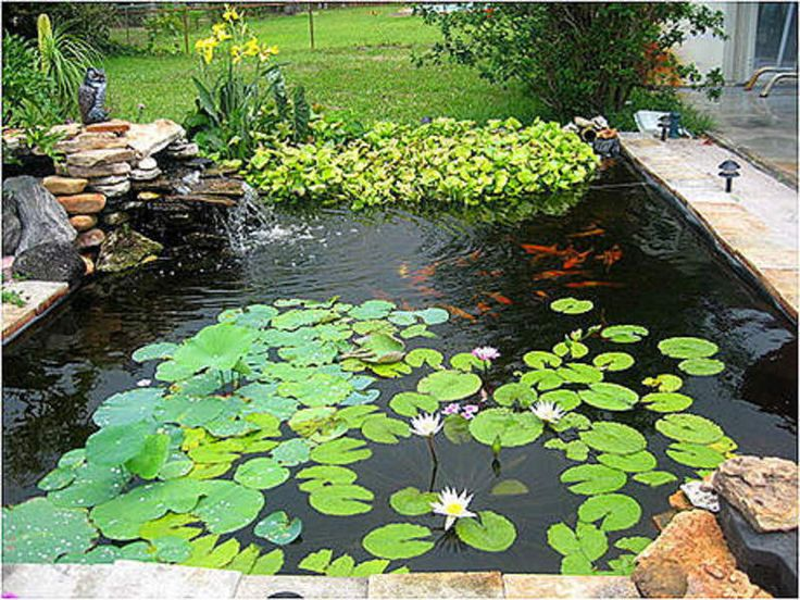 113 best images about japanese koi ponds on pinterest for Design of farm pond ppt