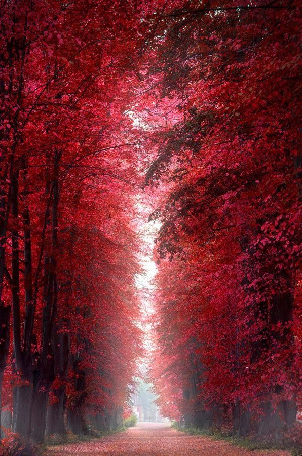 Burning Red Forest