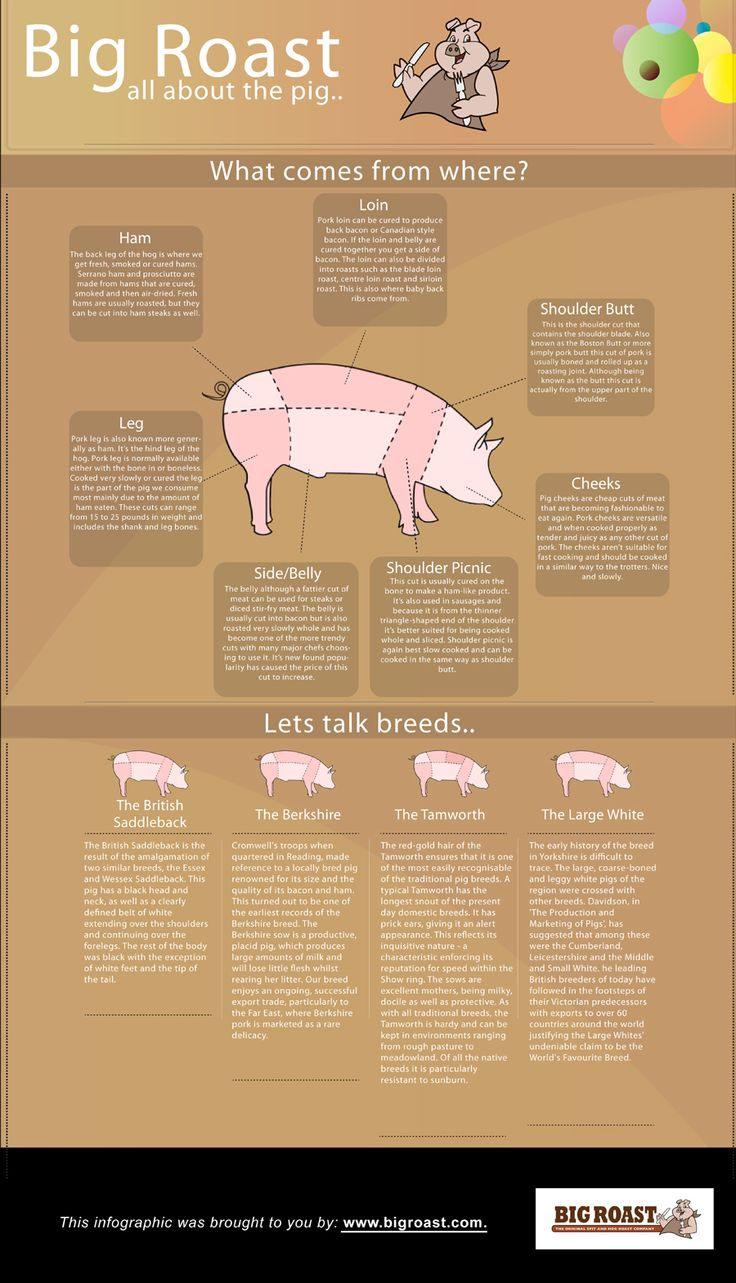 Have you ever wondered what part of the pig you are eating? This infographic shows which part comes from where, as well as presents various breeds of