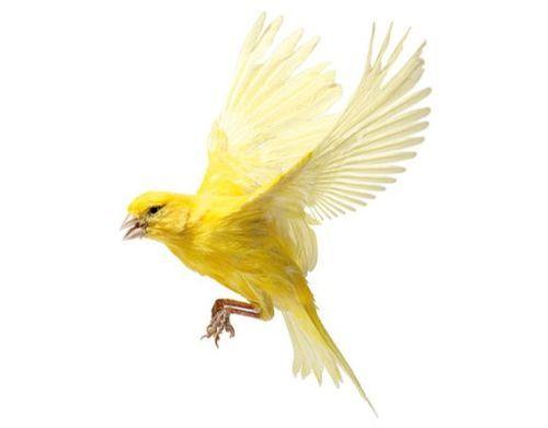 Canary   by Andrew Zuckerman