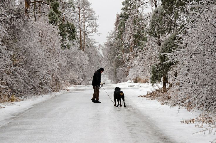 Ice Storm - December 2013