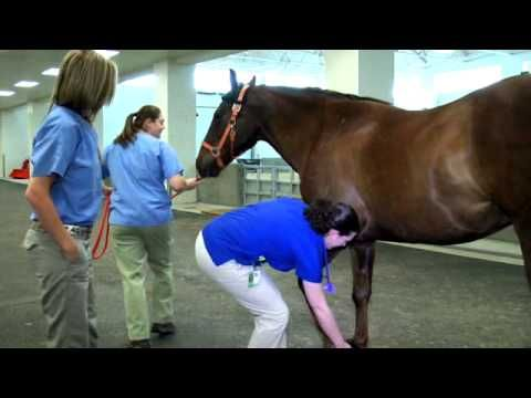 Equine Hospital Tour at the University of Tennessee Veterinary Medical Center - YouTube