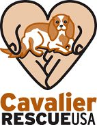 Cavalier King Charles Spaniel Club - USA - Rescue Contacts