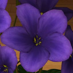 Fiołek fioletowy