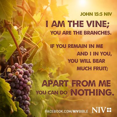Word Of God Quotes Wallpaper I Am The Vine You Are The Branches John 15 5 Niv