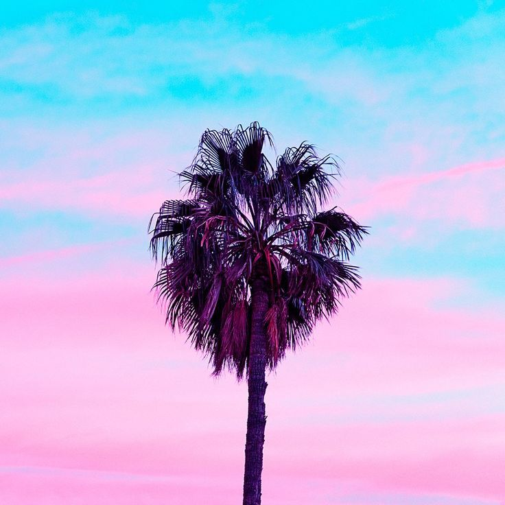 Palm Tree Iphone Wallpaper: Best 25+ Spring Screensavers Ideas On Pinterest