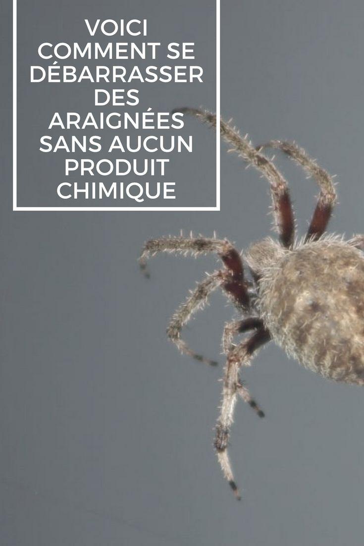 voici comment se d barrasser des araign es sans aucun. Black Bedroom Furniture Sets. Home Design Ideas