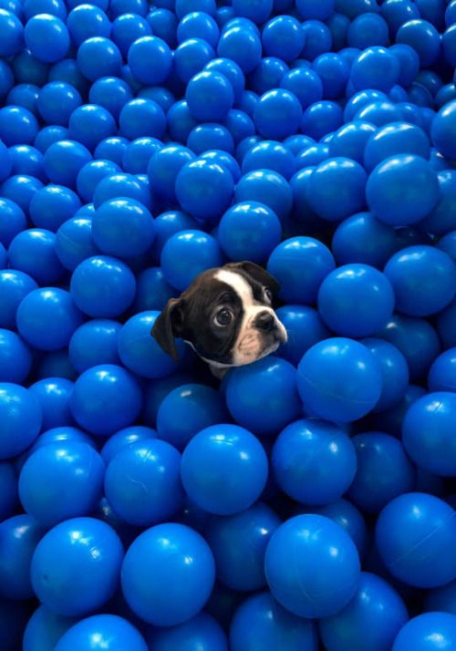 17 best ideas about ball pits on pinterest toddler