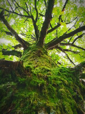 Tree Nature Growth Tree Trunk Beauty In Nature Day Green Color Outdoors Low Angle View Tranquility Branch Forest No People Scenics Sky ArtOfNature Green Color Beauty In Nature Tree Norway