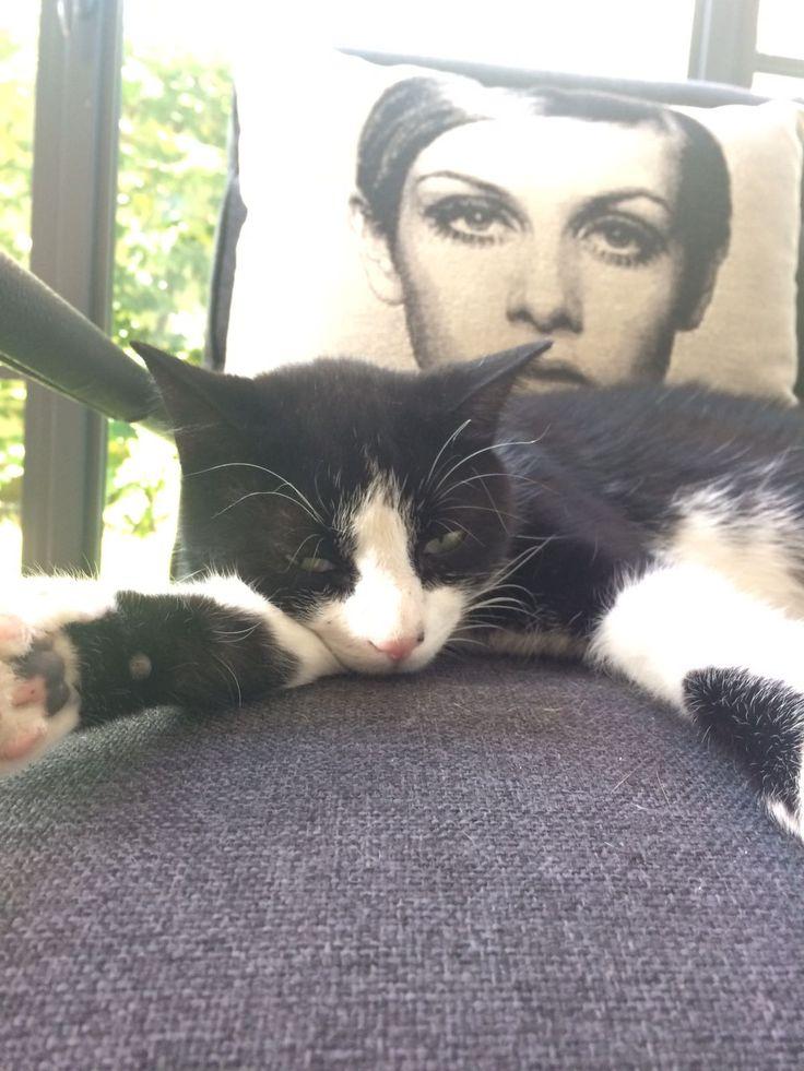 Figaro: wie kent hem niet