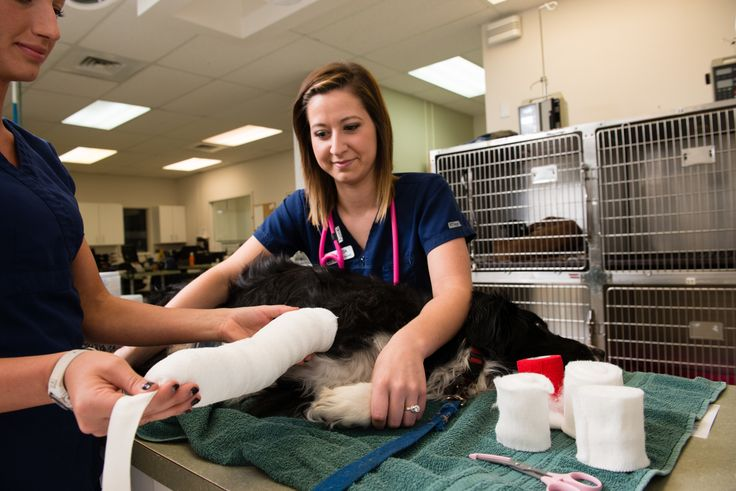 WestVet Idaho's only 24 hour Veterinary Emergency