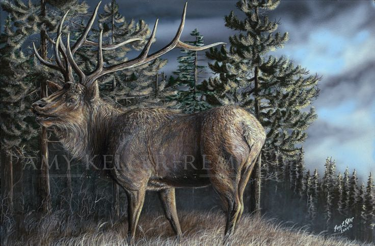 """Realism by Amy Keller-Rempp Art. """"Whistling Pines"""", 16"""" by 24"""", acrylic on wood. Original still available, very popular among nature lovers and hunters. Very popular in giclee prints and fine art cards."""