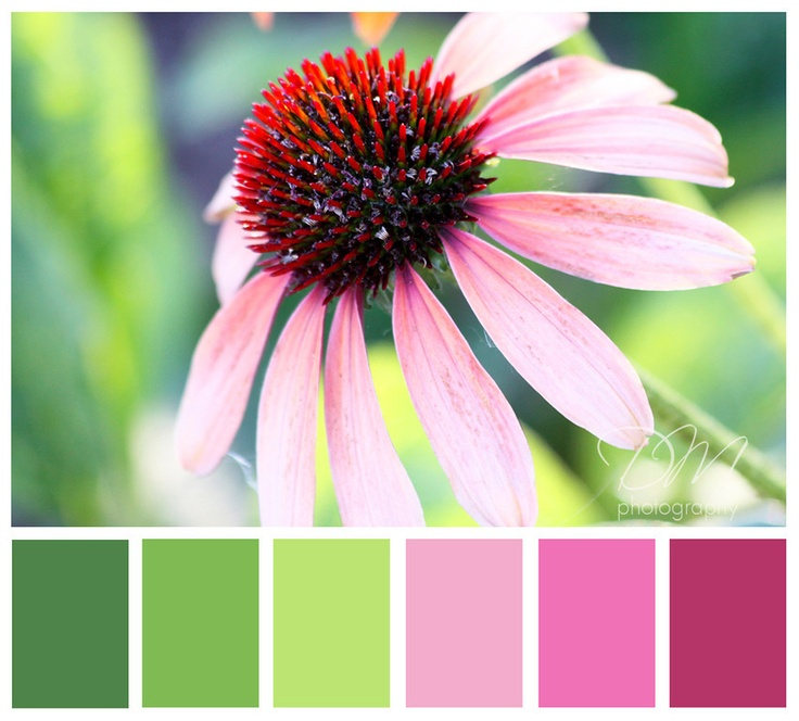 color palette - grass green, apple green, pink. For Audrey's room when she's a little older?
