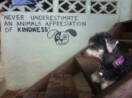Volunteering With Animals Abroad at the Dog Rescue Project, Thailand