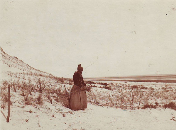 A Danish woman from the island Fanø, early 1900s,  is planting plants (pine or Leymus) in the dunes to prevent  the sand from flying futher into the farm land.