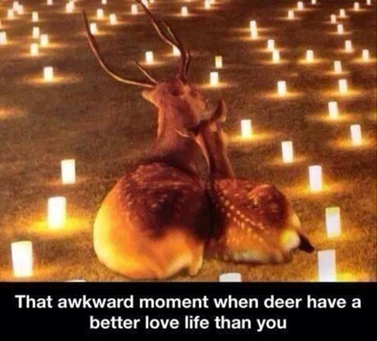 Funny Animal Pictures Of The Day � 23 Pics