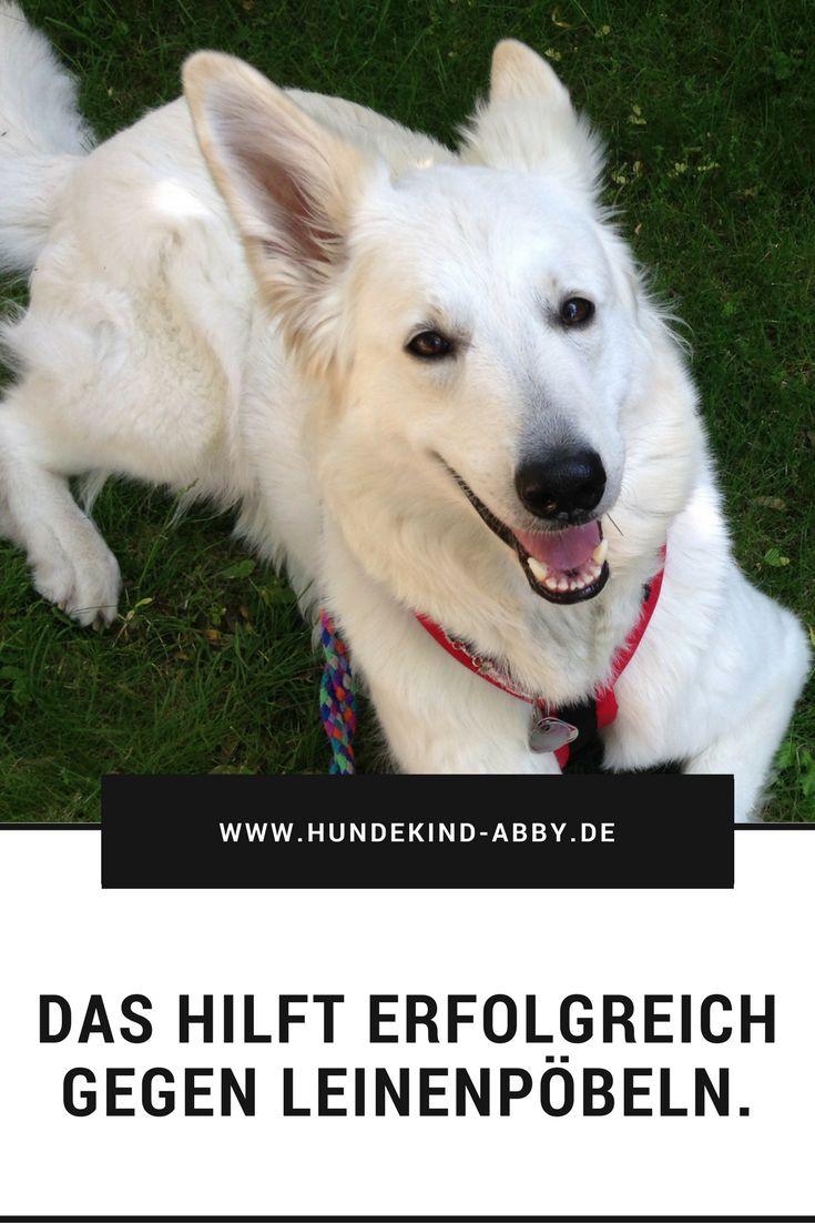 #Hund #Hundeblogger #Hundeliebe #Wissen #Fotografie Hunde    Erziehung    DIY    Wissen    Gesundheit