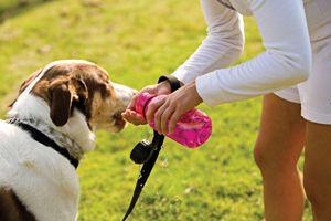El golpe de calor en perros es una emergencia veterinaria muy común en los meses más calirosos del año. Evítalo con estos consejos.