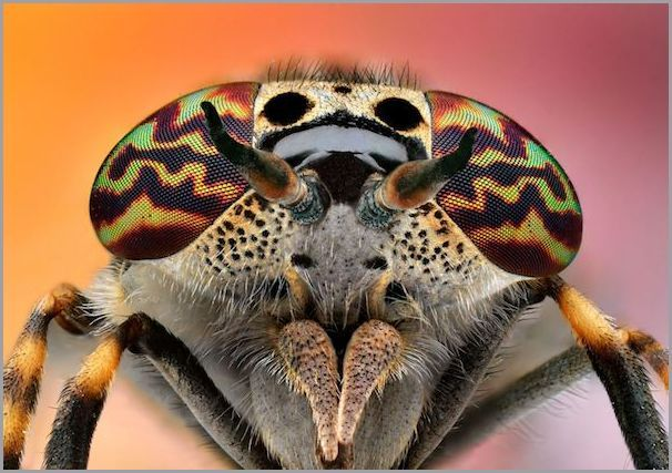 Amazing insect photography that will make you think more about photographing the insects you see...  #AnimalPhotography #MacroPhotography