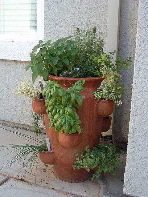 Herb garden.  This is a strawberry jar; I had a clay one but the kids broke it playing baseball.  I now have a plastic one, and it is great -- Linda