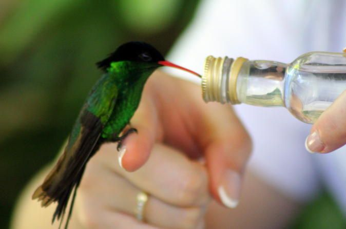 Rocklands Bird Sanctuary and Montego Bay Highlights Tour This half-day tour will take you to Rocklands Bird Sanctuary and to tourist highlights in Montego Bay including Sam Sharp Square, Saint James Parish Church, Richmond Hill Great House and hip-strip shopping.Your professional and knowledgeable guide will meet you in the lobby of your Montego Bay or Grand Palladium hotel. The first stop on this tour will be at the Rocklands Bird Sanctuary in the hills of Anchovy for a once-...