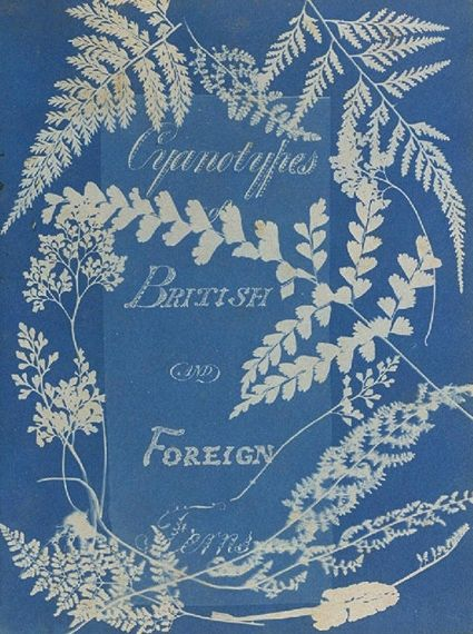 (via History of Photography in 40 Photographs - Collection Resources - Collection - National Media Museum)Cyanotypes of British and Foreign Ferns Anna Atokins, 1851