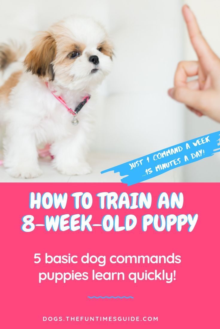 Dog Training Commands 101 How Do You Train An 8 Week Old Puppy To