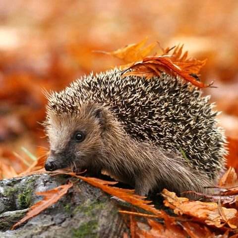 Summer may have gone for another year, but it's not all doom and gloom – we promise! Check out our list of reasons why autumn should…