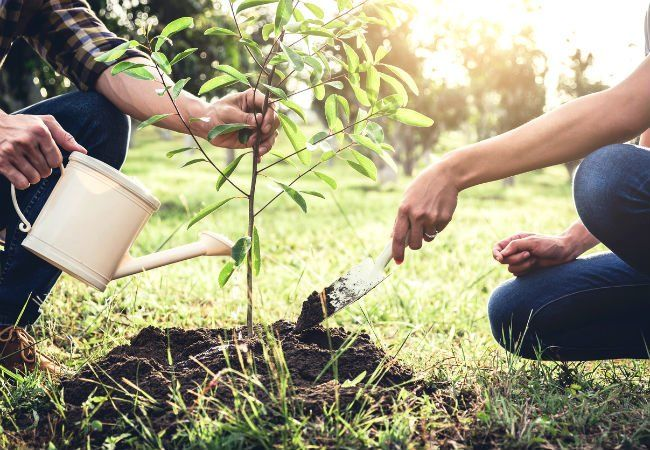 Best Time To Plant A Tree Spring Vs Fall Solved Plants