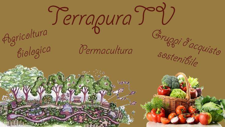 """01/12/13 - TerrapuraTV - Permacultura, agricoltura bio e gruppi di acquisto sostenibile  Presentazione di Leda Raspo, introduzione di Gerardo Granito ed interventi di Primiana Leonardini Pieri - """"Fattoria le Macchie"""" http://www.agricolalemacchie.weebly.com - e Raffaella Nencioni - http://bionieri.ning.com/profile/Raff... http://www.terrapurabio.com"""