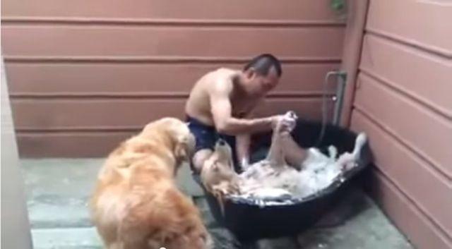 Ecco il cane che si rilassa nella vasca da bagno [Video]