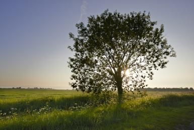 Ash Tree Magic, Folklore and Legends: In Norse legend, Odin hung from an ash tree, Yggdrasil, for nine days.