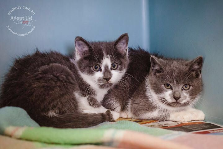 These babies are safe with rescue but available to adopt until they are picked up. They are both hissy kids at the moment but with love and handling will soon become loving family members \u003C3