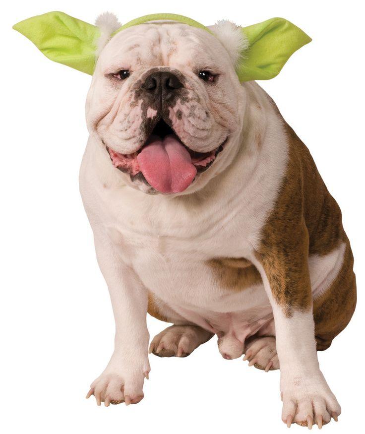 Best 25+ Yoda dog costume ideas on Pinterest | Pugs, Dog pirate ...